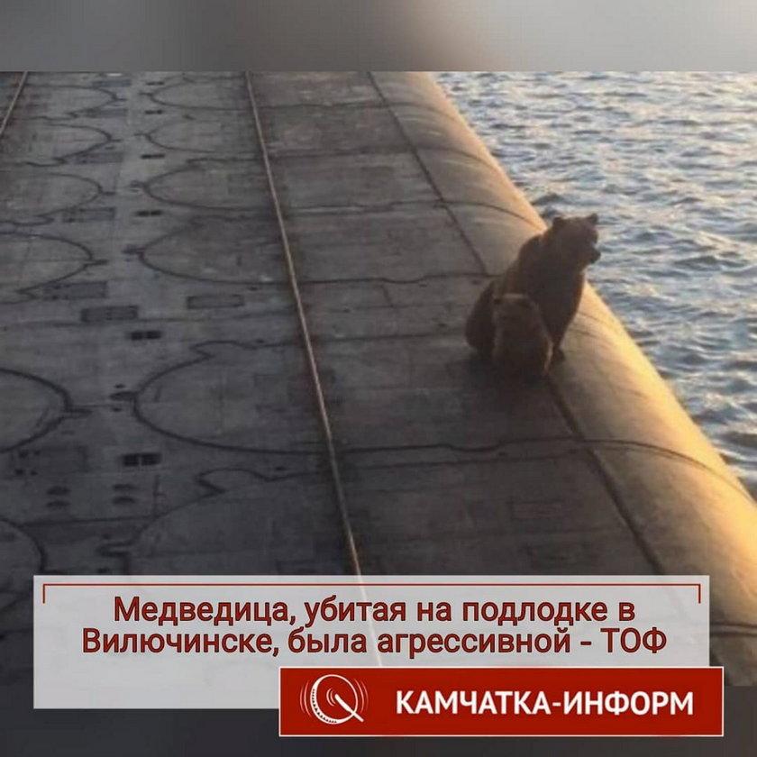 Niedźwiedzica z młodym weszła na łódź podwodną