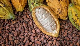 EU threatens to ban cocoa from Ghana over galamsey