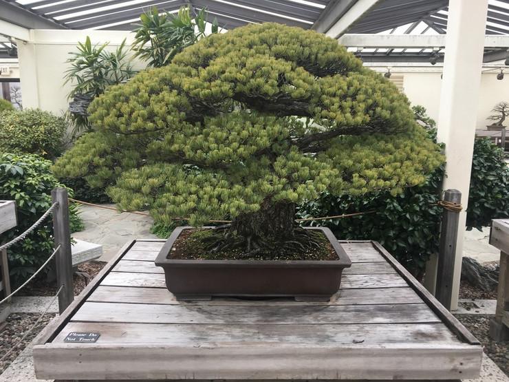 bonsai hirošima foto Reddit ArkadiusBear