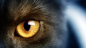 Koty widzą duchy?