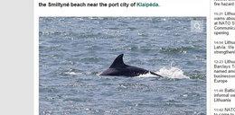 Delfiny butlonose w Zatoce Gdańskiej