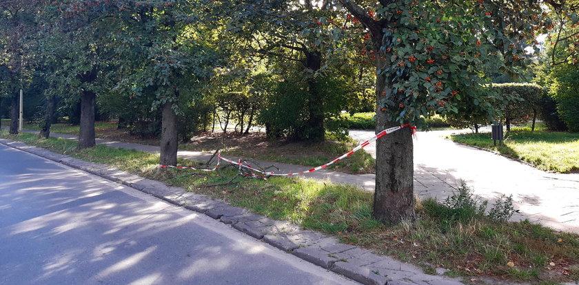 Marzą o Zielonym Expo w Łodzi? Niech zaczną od sprzątania