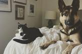 mačka i pas 2