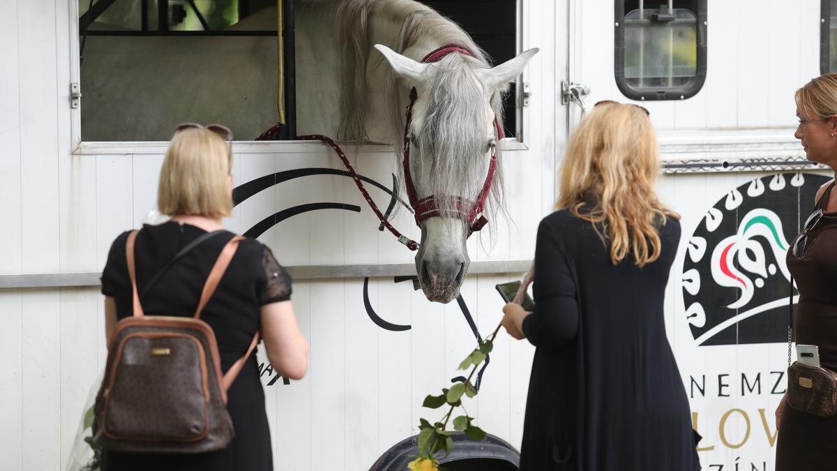 Teljesült Gábor Zsazsa utolsó kívánsága: hazatért – végső nyugalomra helyezték Budapesten, Pintér Tibor fehér lovon érkezett – fotók