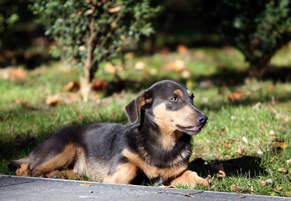 Pas koji ima osnovne uslove i pažnju nikada ne bi nikoga napao