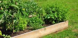 Jak prowadzić ziołowy ogród? Podpowiadamy!