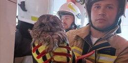 Sówko, gdzieś ty wleciała? Strażacy uratowali zwierzę uwięzione w kominie