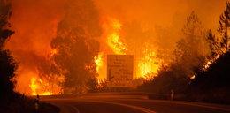 Znowu wielki pożar. Płoną lasy w Portugalii. Nie żyją 62 osoby