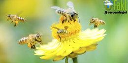 Coś niepokojącego dzieje się z owadami. To zagraża życiu na Ziemi