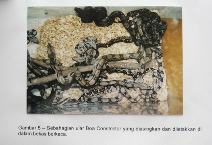 71637_boa-konstriktor01-reuter-ho