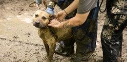 Setki zwierząt uratowanych przed walkami na śmierć i życie
