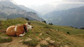 Historia i przyroda, czyli 3 dni w Szwajcarii