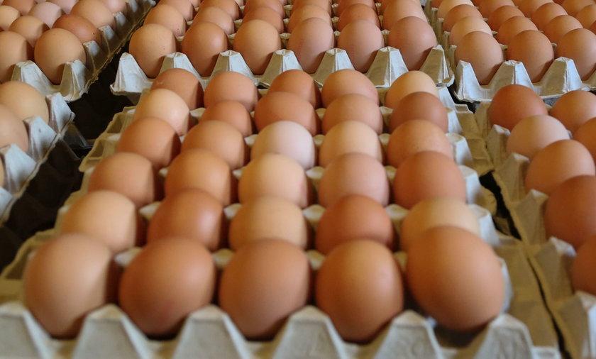 Uwaga! Pałeczki salmonelli na skorupkach jaj