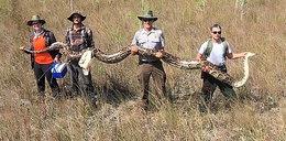 Rekordowo wielki pyton znaleziony na Florydzie