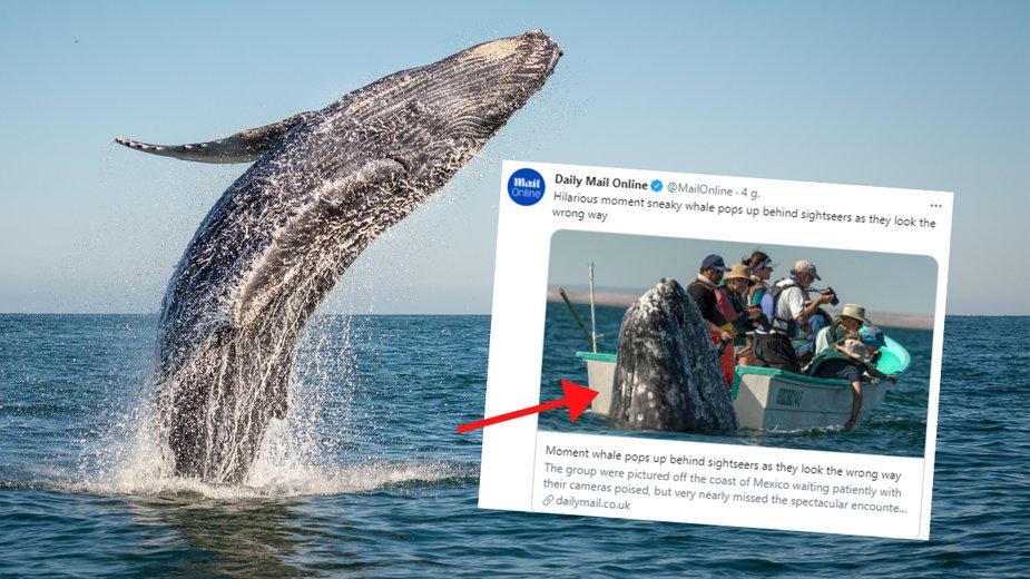 Tuż obok łodzi pełnej turystów wynurzył się wieloryb