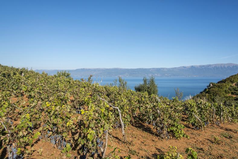 Widok z winnic na Adriatyk