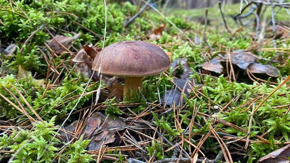Przepis na grzyby marynowane w occie