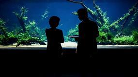Największe naturalne akwarium świata powstało w Lizbonie