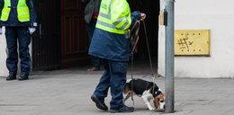 Psy z Niemiec szukały Ewy Tylman. Efekty? Utajnione!