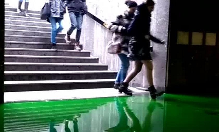 Zielona substancja