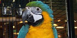 Papuga wskazała mordercę