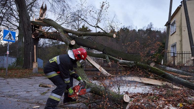Strażacy usuwają połamane drzewo