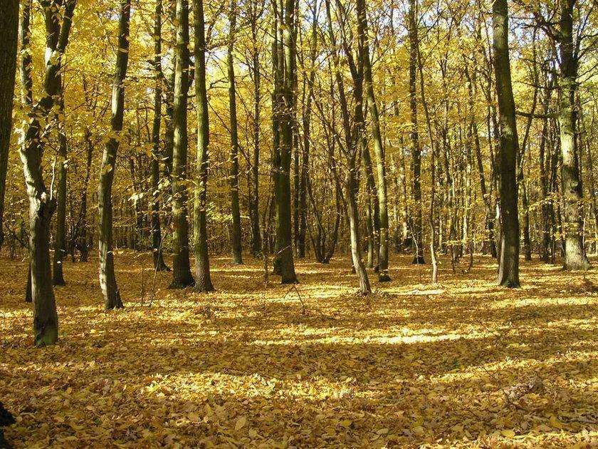 Już jutro pierwszy dzień jesieni
