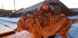 Koszmarne sceny w Rosji. Rolnik zabił wilka gołymi rękami. FILM