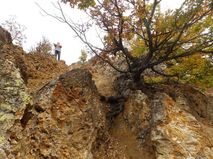 387955_kraljevo-05--kamena-uma-5--foto-n.-boovi