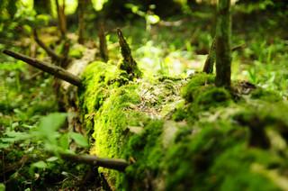 Czy Puszcza Karpacka nadal istnieje? 'Turnicki Park Narodowy ma chronić wyjątkowe płaty lasu' [WYWIAD]