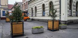 Nowe krzewy na pl. Nowym. Jest pięknie i zielono