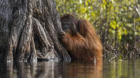 Zwycięzcy konkursu Nature Photographer of the Year 2017