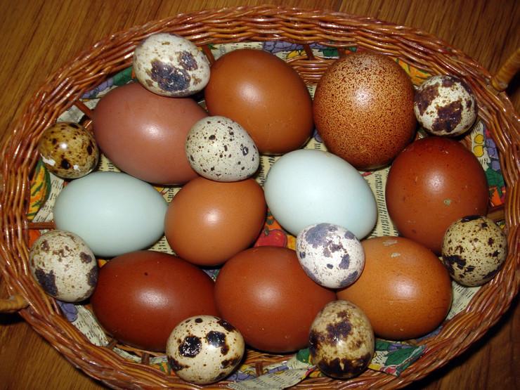 Obojena jaja Srna