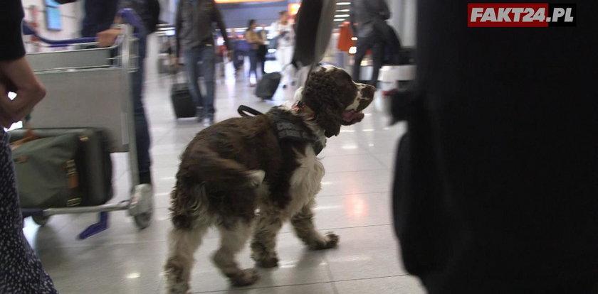 Brawurowa akcja na lotnisku w Warszawie. Podróżnych sparaliżowało