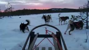 Psim zaprzęgiem po bezkresnej bieli Laponii