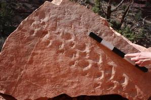 Studenti u Nacionalnom parku otkrili tragove stopa reptila stare 300 MILIONA GODINA