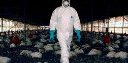Pierwsze zakażenie wirusem H10N3 u człowieka. 41-latek trafił do szpitala