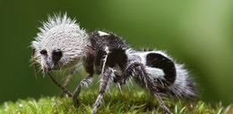 Najdziwniejsze i najbrzydsze zwierzęta świata