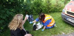 Horror w schronisku w Radysach. 4 tony martwych psów!