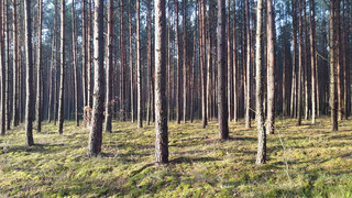 Ekolodzy: Decyzje ws. Puszczy Białowieskiej muszą być zgodne z rekomendacjami UNESCO