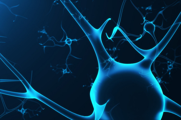 komórki neuronowe