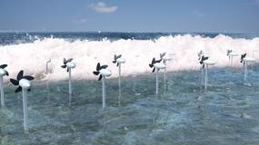 Projekt Sea Horse nowym pomysłem na produkcję energii