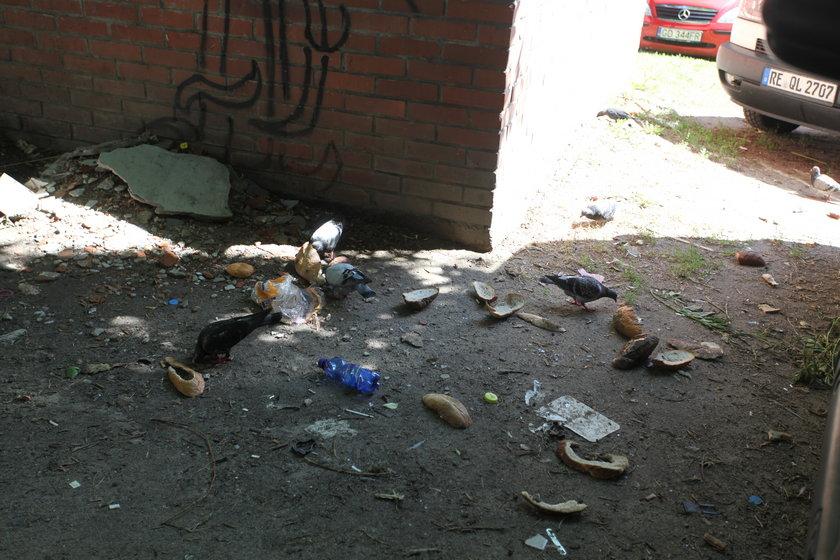 Zaśmiecione podwórko w Gdańsku