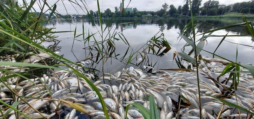 Tysiące martwych ryb unosiło się na tafli jeziora w Gnieźnie. Wiadomo, co je zabiło
