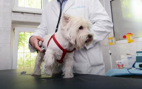 Gojazni psi skloniji šećernoj bolesti od mršavih pasa