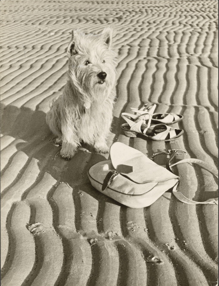 "Paul Wolff i Dr. Wolff & Tritschler OHG, ""Dog at the beach"" (1936)"