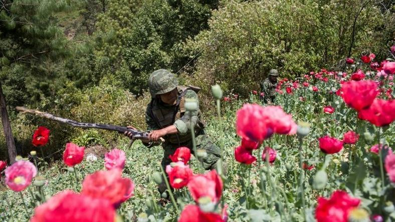Mexican soldiers take part in an operation to destroy a poppy plantation in the mountains in Guerrero State