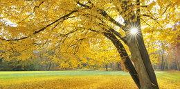 W tym roku jesień będzie...