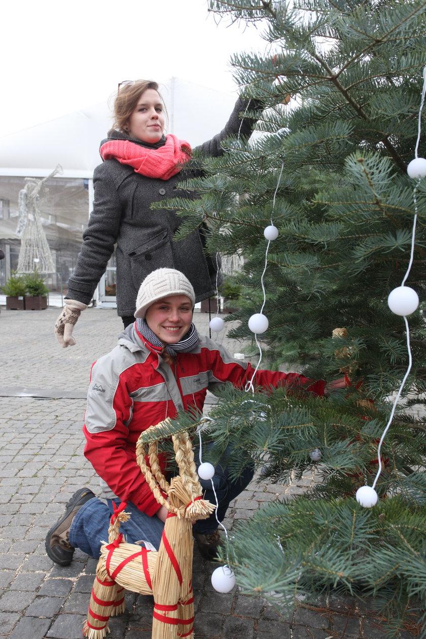 Stojenie świątecznej choinki w Gdańsku