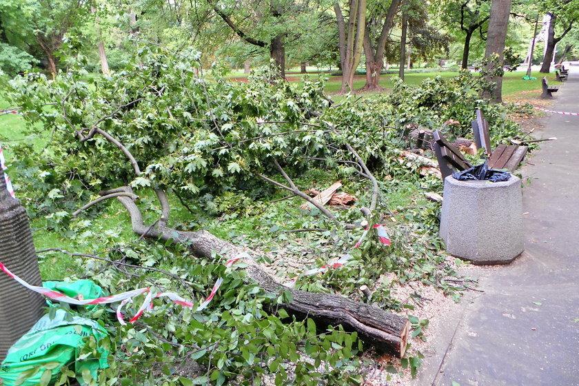 """To była ich ulubiona ławka i drzewo. """"Wiedzieliśmy, że nie da się jej uratować"""". Nowe fakty o tragedii w Parku Praskim"""